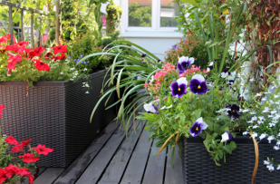 Beautiful modern terrace with seasonal summer flowers