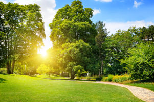 Image of Trees on a Sunny Day